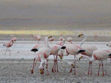 Flamingo group 1